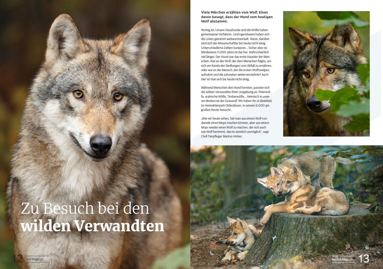 Deutscher Tierarzt Verlag